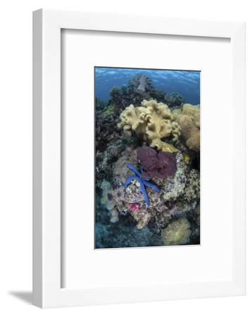 A Diverse Array of Invertebrates Cover a Reef in Indonesia-Stocktrek Images-Framed Photographic Print