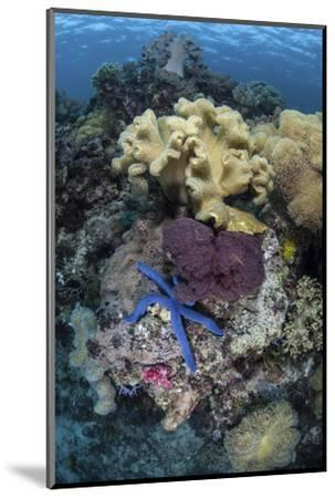 A Diverse Array of Invertebrates Cover a Reef in Indonesia-Stocktrek Images-Mounted Photographic Print
