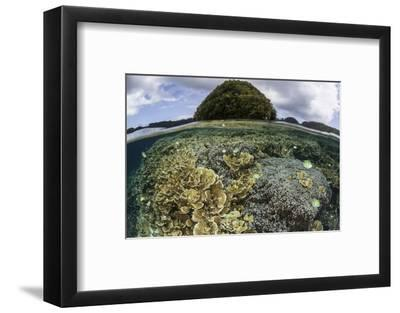 Reef-Building Corals Grow Inside Palau's Lagoon-Stocktrek Images-Framed Photographic Print