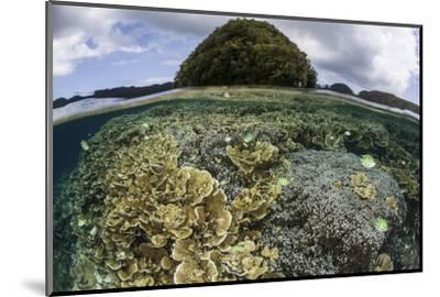 Reef-Building Corals Grow Inside Palau's Lagoon-Stocktrek Images-Mounted Photographic Print