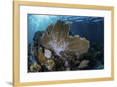 A Colorful Set of Gorgonians on a Diverse Reef in the Caribbean Sea-Stocktrek Images-Framed Photographic Print