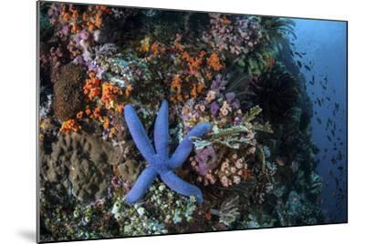 A Blue Starfish Clings to a Reef in Komodo National Park, Indonesia-Stocktrek Images-Mounted Photographic Print