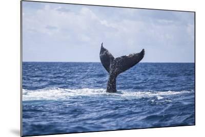 A Humpback Whale Slaps its Tail on the Surface of the Atlantic Ocean-Stocktrek Images-Mounted Photographic Print