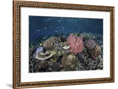 A Diverse Array of Corals Grow in Raja Ampat, Indonesia-Stocktrek Images-Framed Photographic Print
