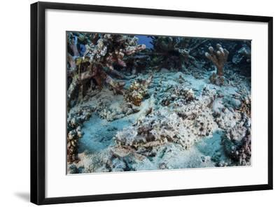 A Crocodilefish Lays on the Seafloor Near an Artificial Reef-Stocktrek Images-Framed Photographic Print