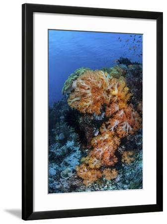 A Beautiful Cluster of Soft Coral on a Coral Reef in Indonesia-Stocktrek Images-Framed Photographic Print