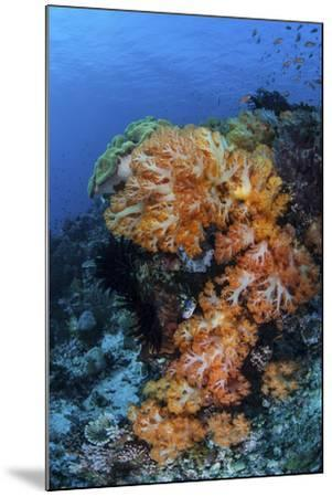 A Beautiful Cluster of Soft Coral on a Coral Reef in Indonesia-Stocktrek Images-Mounted Photographic Print
