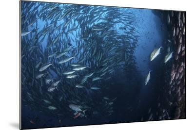 A Large School of Trevally Near Cocos Island, Costa Rica-Stocktrek Images-Mounted Photographic Print