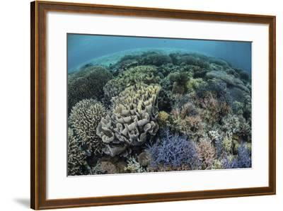 Colorful Corals Near the Island of Alor, Indonesia-Stocktrek Images-Framed Photographic Print