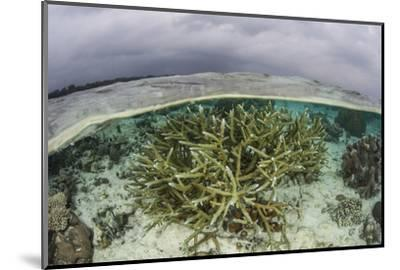 A Staghorn Coral Colony Grows in Shallow Water in the Solomon Islands-Stocktrek Images-Mounted Photographic Print