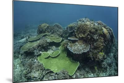 A Healthy Coral Reef Thrives in Komodo National Park, Indonesia-Stocktrek Images-Mounted Photographic Print