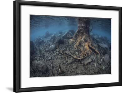 Mangrove Roots Rise from the Seafloor of an Island in Indonesia-Stocktrek Images-Framed Photographic Print