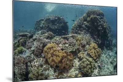 A Beautiful Coral Reef Thrives in Komodo National Park, Indonesia-Stocktrek Images-Mounted Photographic Print