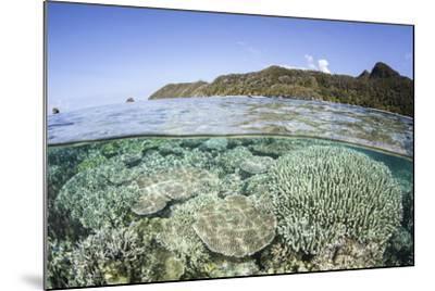A Beautiful Coral Reef in Raja Ampat, Indonesia-Stocktrek Images-Mounted Photographic Print