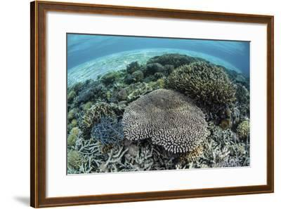 Reef-Building Corals Near Alor, Indonesia-Stocktrek Images-Framed Photographic Print