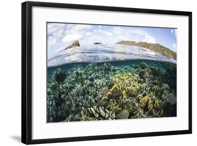 A Beautiful Coral Reef in Raja Ampat, Indonesia-Stocktrek Images-Framed Photographic Print