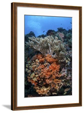 Soft Corals and Other Invertebrates Grow on a Reef in Indonesia-Stocktrek Images-Framed Photographic Print