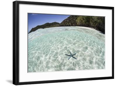 A Blue Starfish on the Seafloor of Raja Ampat, Indonesia-Stocktrek Images-Framed Photographic Print