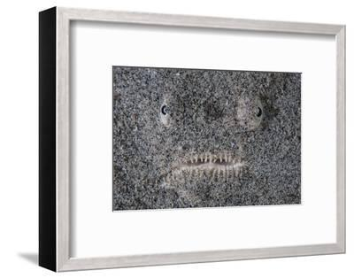 A Stargazer Fish Camouflages Itself in the Sand-Stocktrek Images-Framed Photographic Print