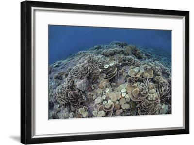 Corals Compete for Space to Grow on a Reef in Indonesia-Stocktrek Images-Framed Photographic Print