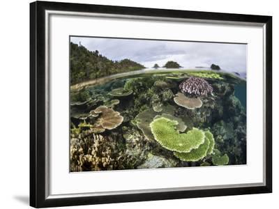 Reef-Building Corals in Raja Ampat, Indonesia-Stocktrek Images-Framed Photographic Print