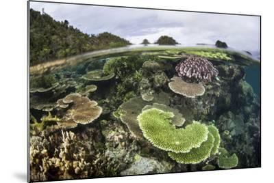Reef-Building Corals in Raja Ampat, Indonesia-Stocktrek Images-Mounted Photographic Print