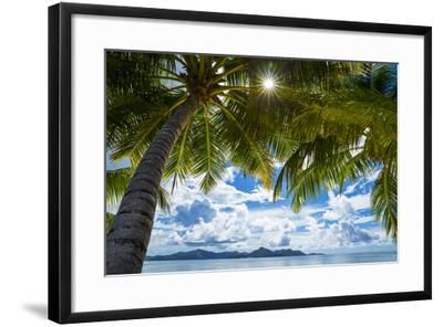 Palm Trees and Tropical Beach, La Digue, Seychelles-Jon Arnold-Framed Photographic Print