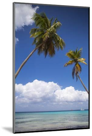 Dominican Republic, Punta Cana, Parque Nacional Del Este, Saona Island, Catuano Beach-Jane Sweeney-Mounted Photographic Print