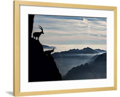 Two Alpine Ibex Dominate from Above the Spectacular View of the Italian Alps.-ClickAlps-Framed Photographic Print