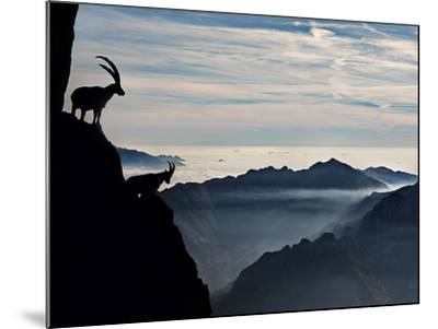 Two Alpine Ibex Dominate from Above the Spectacular View of the Italian Alps.-ClickAlps-Mounted Photographic Print