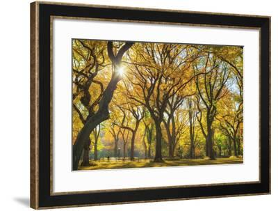 Usa, New York City, Manhattan, Central Park, the Mall-Michele Falzone-Framed Photographic Print