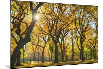 Usa, New York City, Manhattan, Central Park, the Mall-Michele Falzone-Mounted Photographic Print