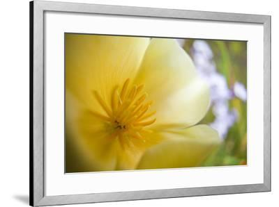 USA, Oregon, Willamette Valley, Close-Up of Poppy in Bloom-Terry Eggers-Framed Photographic Print