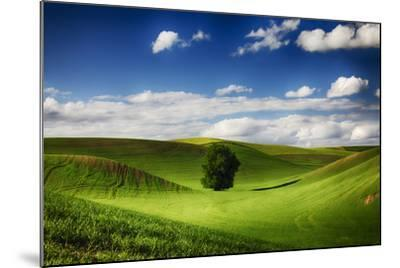 Washington, Colfax, Rolling Wheat Fields with Lone Tree-Terry Eggers-Mounted Photographic Print
