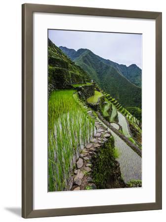 Batad Rice Terraces, World Heritage Site, Banaue, Luzon, Philippines-Michael Runkel-Framed Photographic Print