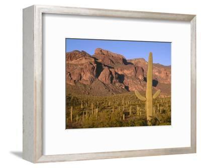 Arizona, Organ Pipe Cactus National Monument-John Barger-Framed Photographic Print