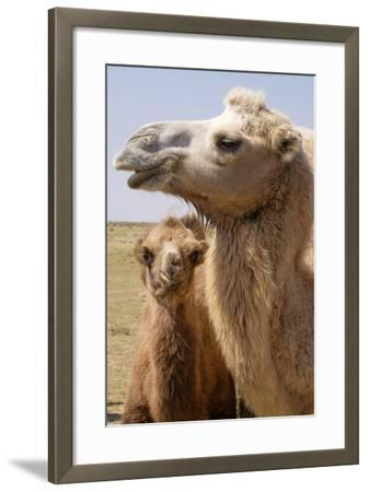 Mongolia, Lake Tolbo, Bactrian Camels-Emily Wilson-Framed Photographic Print