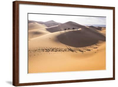 Morocco, Erg Chegaga Is a Saharan Sand Dune-Emily Wilson-Framed Photographic Print
