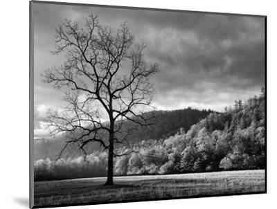 North Carolina, Great Smoky Mountains National Park, Storm Clearing at Dawn in Cataloochee Valley-Ann Collins-Mounted Photographic Print