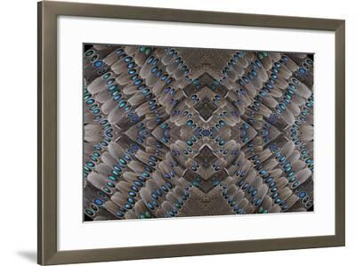 Grey Peacock Tail Feathers Design-Darrell Gulin-Framed Photographic Print