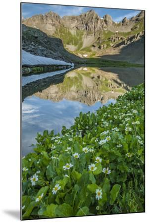 USA, Colorado, San Juan Mountains. Clear Lake Reflection and Marigolds-Jaynes Gallery-Mounted Photographic Print