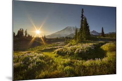 Starburst Setting Sun, Subalpine Wildflowers and Mt. Rainier at Mazama Ridge, Paradise Area-Gary Luhm-Mounted Photographic Print