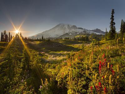 Starburst Setting Sun, Subalpine Wildflowers and Mt. Rainier at Mazama Ridge, Paradise Area-Gary Luhm-Framed Photographic Print