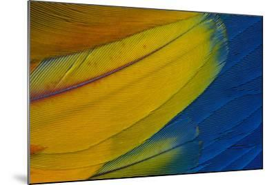 Scarlet Macaw Wing Covert Feathers-Darrell Gulin-Mounted Photographic Print