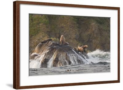 Stellar Sea Lions and Crashing Waves at Flattery Rocks on the Olympic Coast-Gary Luhm-Framed Photographic Print