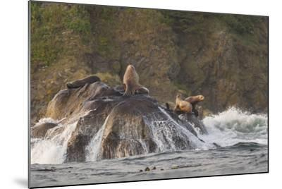 Stellar Sea Lions and Crashing Waves at Flattery Rocks on the Olympic Coast-Gary Luhm-Mounted Photographic Print