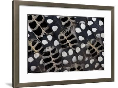Spots of White on Mearns Quails Feather Design-Darrell Gulin-Framed Photographic Print