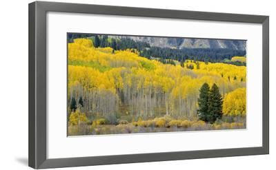 Colorado, Gunnison National Forest-John Barger-Framed Photographic Print