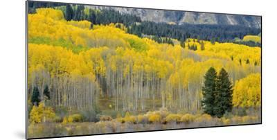 Colorado, Gunnison National Forest-John Barger-Mounted Photographic Print