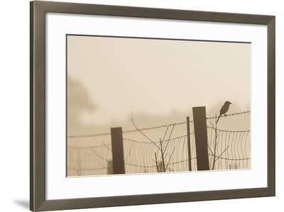 Celery Fields, Sarasota, Florida-Maresa Pryor-Framed Photographic Print